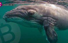 2017 yılındaki sıçramayı tek bir balina sağladı
